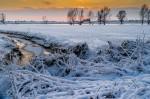 havikerwaard in de sneeuw