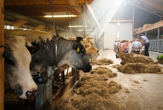 Eten in de boerderijstal